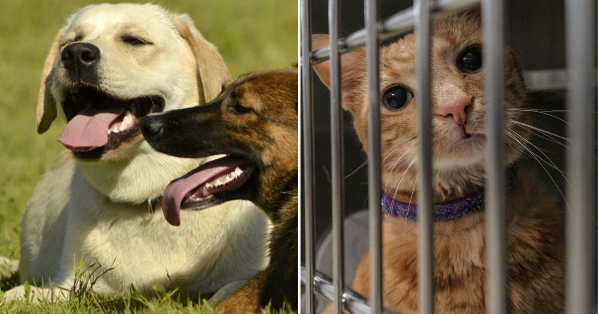 shelter5.png?resize=1200,630 - Kitties And Puppies Rejoiced As Michigan Is Now Officially A No-Kill State For Shelter Animals