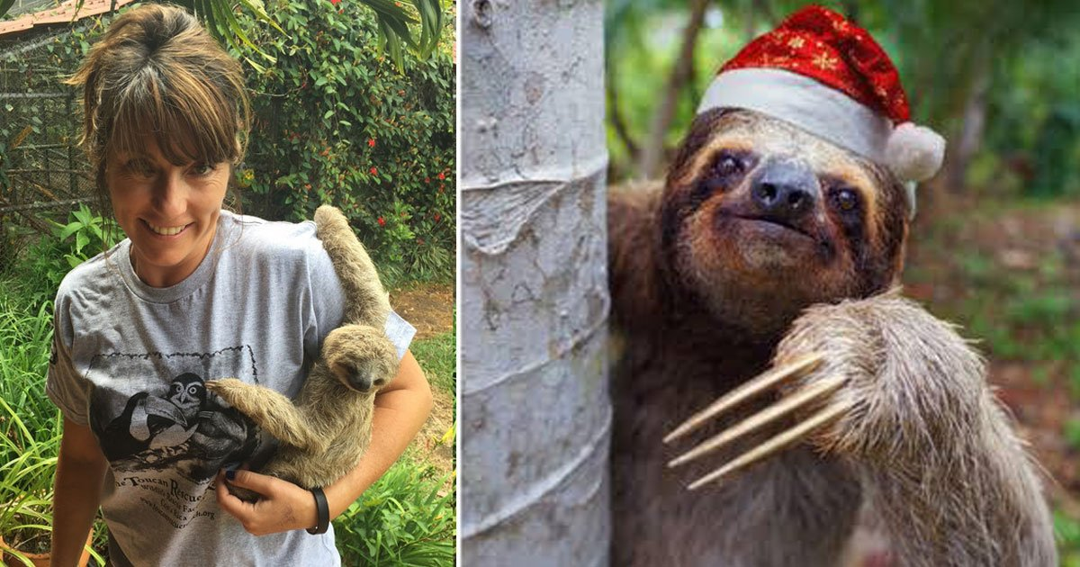 sloth calendar.jpg?resize=412,232 - A Photographer Travels To Costa Rica Every Year To Photograph Sloths For Her Calendars
