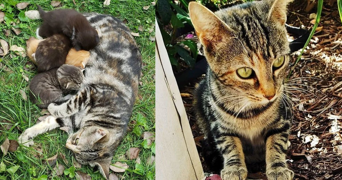 stray cat found forever home and living happily with her four little kittens.jpg?resize=1200,630 - Stray Cat Took The Woman Who Was Feeding Her To See Her Kittens And Ended Up Finding A Forever Home
