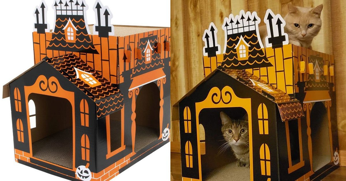 target is now selling mini haunted houses for your cats and it is perfect for halloween.jpg?resize=1200,630 - This Mini Haunted House For Your Cat Is Perfect For Upcoming Halloween