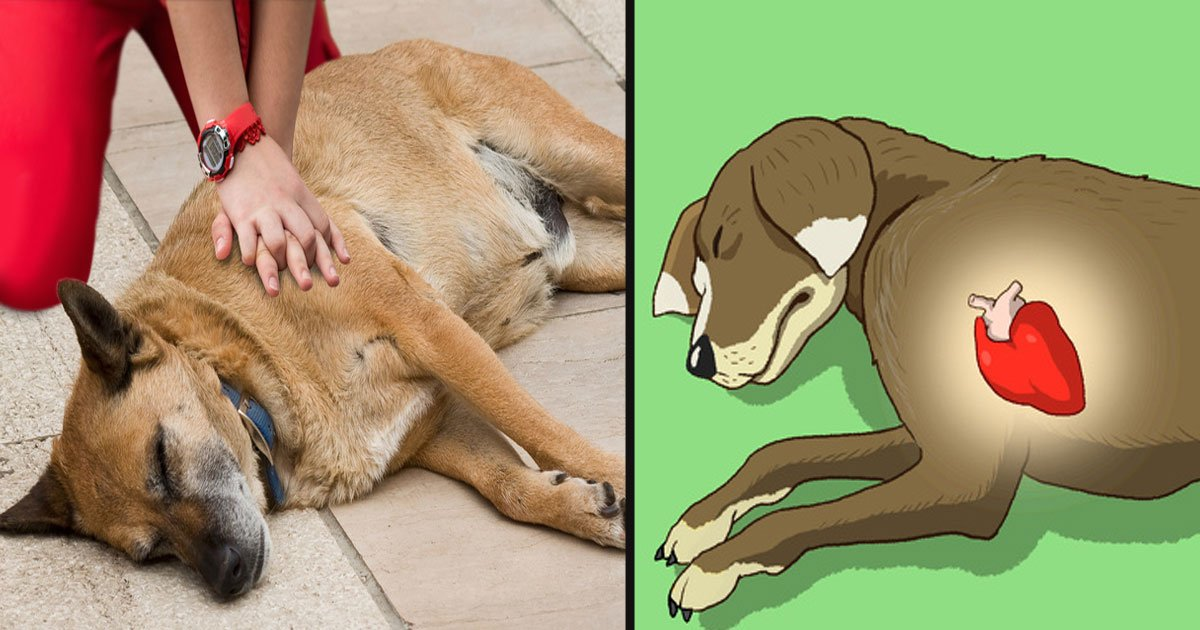 untitled 1 30.jpg?resize=1200,630 - How To Rescue A Dog In 5 Steps