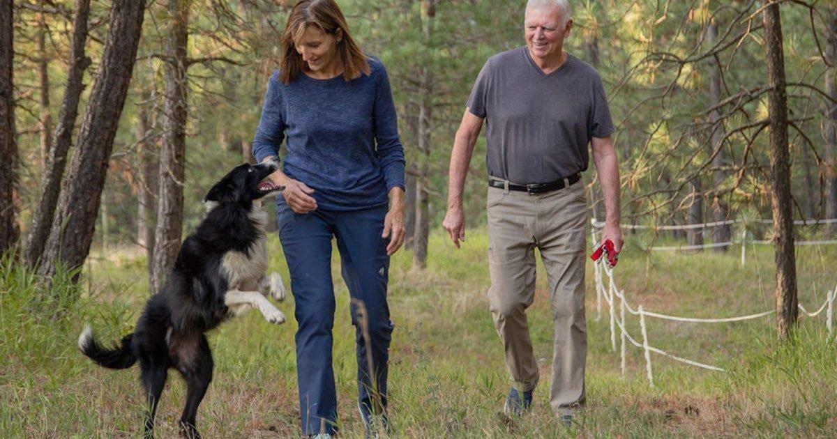 untitled 1 recovered.jpg?resize=412,232 - Cette femme a quitté son emploi pour partir à la recherche de son chien perdu