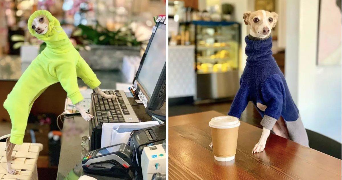 untitled design 1.png?resize=300,169 - Cet adorable chien est le nouvel influenceur Instagram que tout le monde devrait suivre