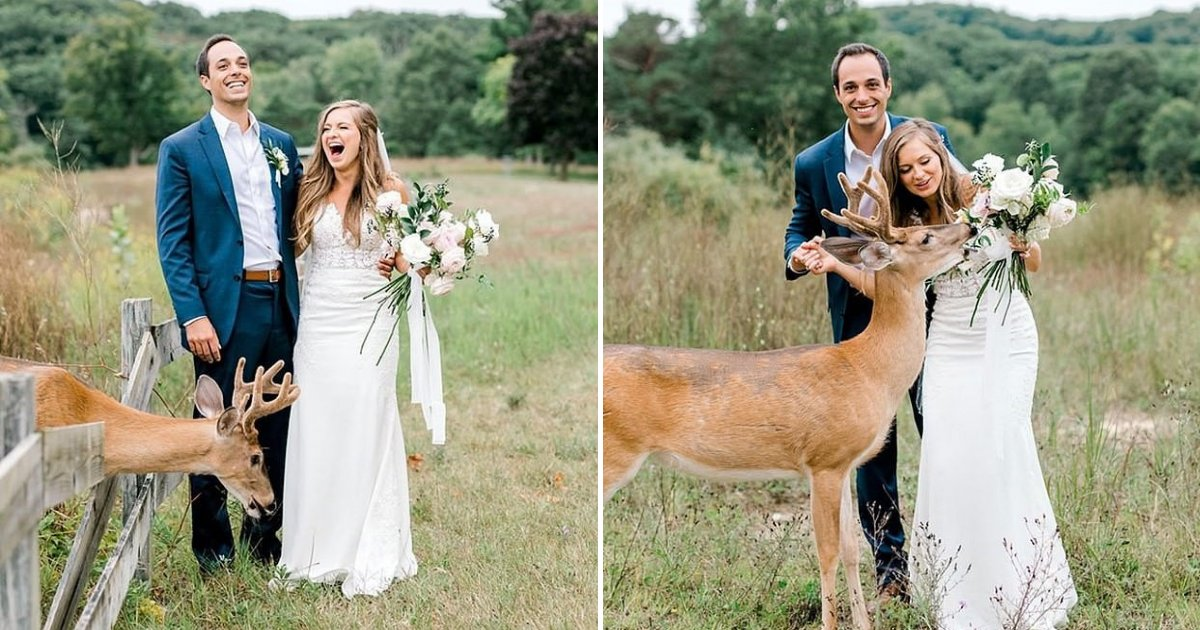 untitled design 39.png?resize=412,232 - Couple Had 'Fairytale' Wedding Shoot After Deer Joined Them And Ate Bride's Flowers