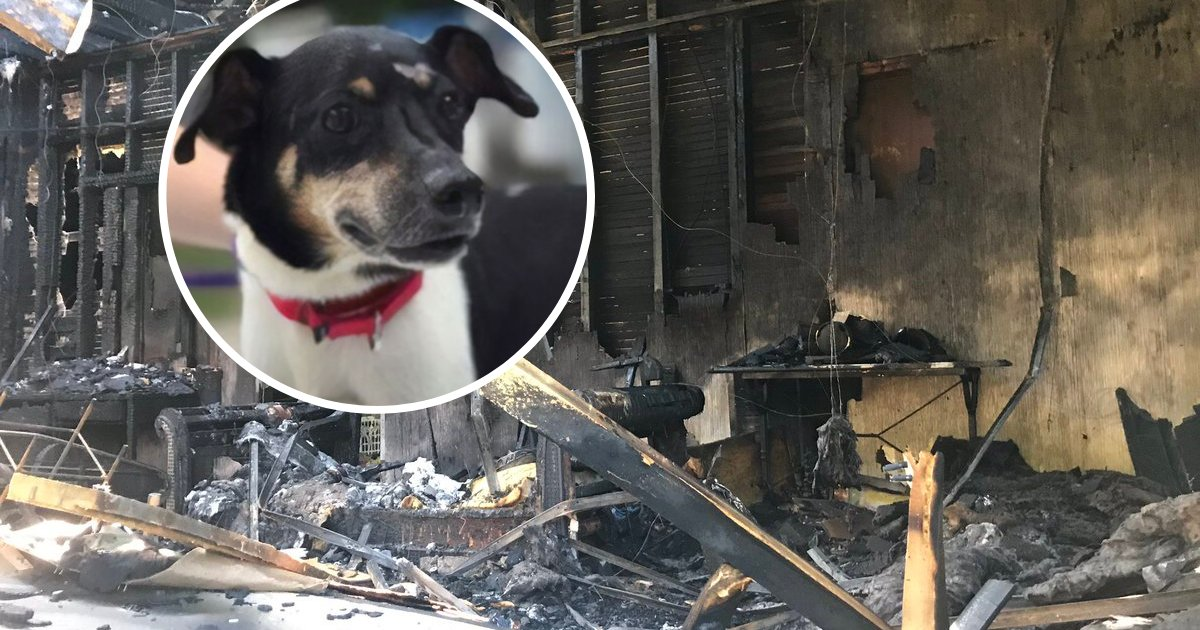 untitled design 93.png?resize=1200,630 - Brave Dog Sacrificed Himself To Rescue Family As House Caught On Fire