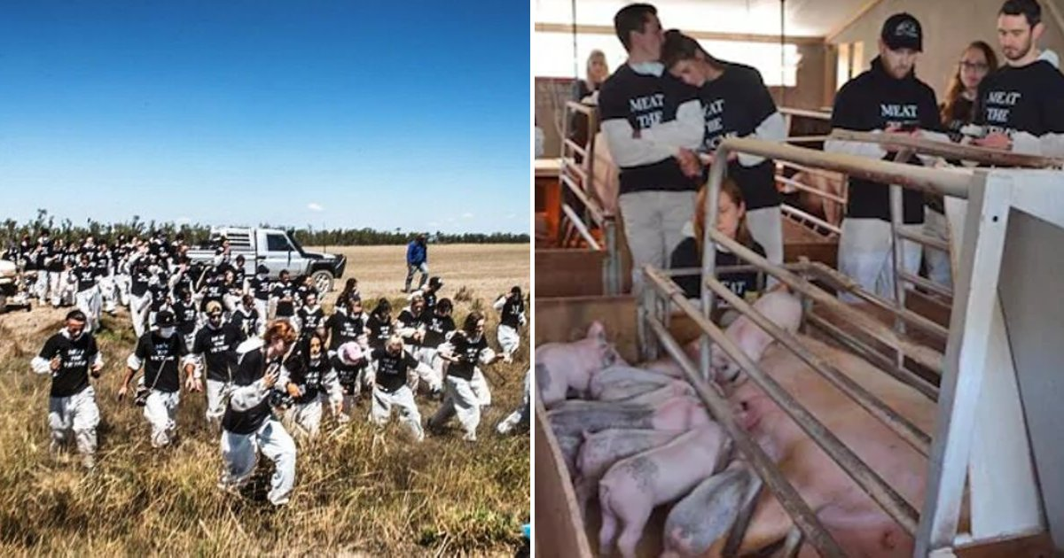 vegans.png?resize=412,232 - 'Vegan Terrorists' Who Raid Farms Could Soon Face Up To FIVE Years In Prison