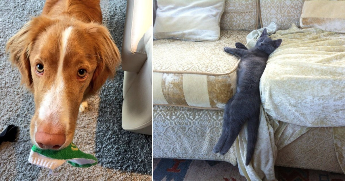 weird guys.png?resize=412,232 - 15+ Pet Owners Share Their Strangest Photos Of Their Furry Family