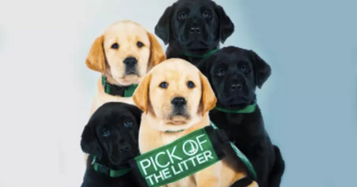 y3 16.png?resize=1200,630 - New Netflix Documentary Film Pick of the Litter Was Rated 97% on Rotten Tomatoes