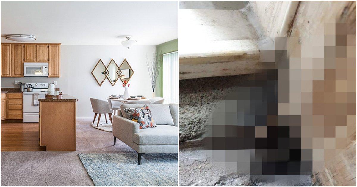 11 6.png?resize=412,232 - 새 아파트 문틈에서 발견된 충격적인 물건의 정체