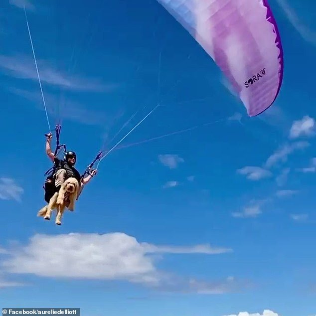 In the videos, Snickers can be seen attached to Mr Elliot via a harness while safely gliding through the air