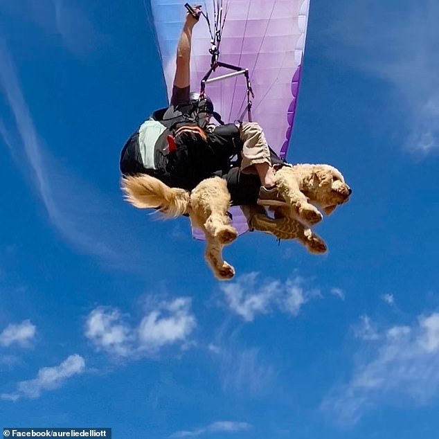 A dog has been seen flying through the skies above Sydney with his owner, shocking onlookers and becoming an internet sensation
