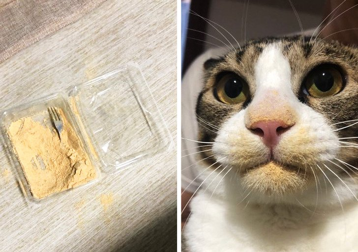 20+ Animals That Had a Surprise in Store for Their Owners