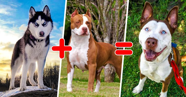 20 Unusual Mixed Dog Breeds That Are Totally Pawsome