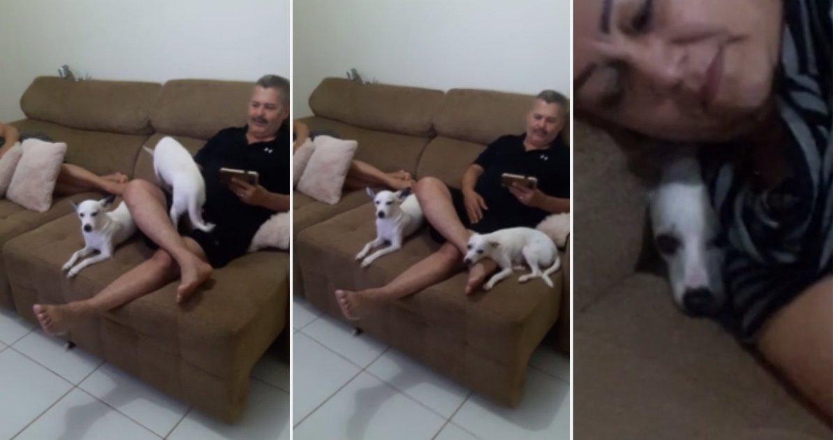 72912674 415402735789255 4151175132414476288 n.png?resize=412,232 - Guilty Dog Hilariously Hides After Being Interrogated For Eating Flip-Flops