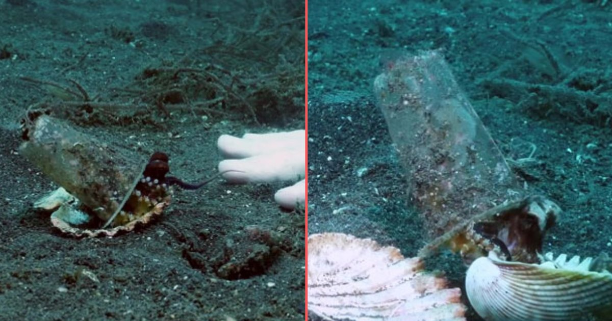 74407475 403464243660764 4645493655929356288 n.png?resize=412,232 - Diver Convinces Baby Octopus To Discard Its Plastic Cup In Exchange For A Seashell For Protection