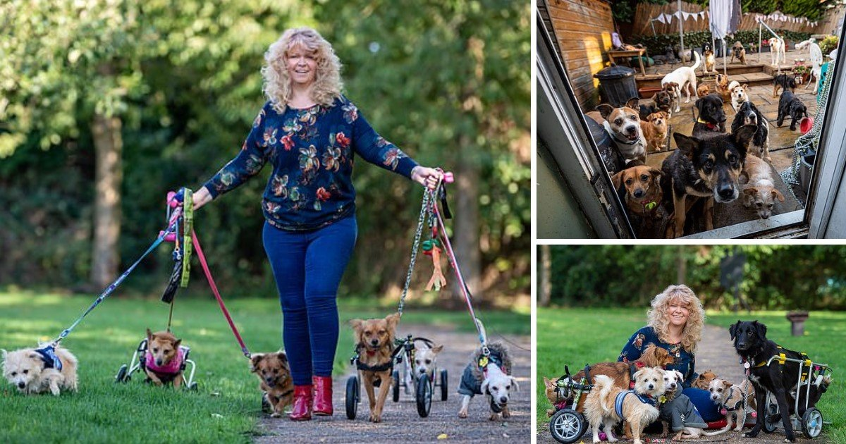 a 20.jpg?resize=1200,630 - A 48-Year-Old Dubbed 'Miracle Worker' For Having Healed Disabled Dogs Shares Her Home With 27 Abandoned Dogs