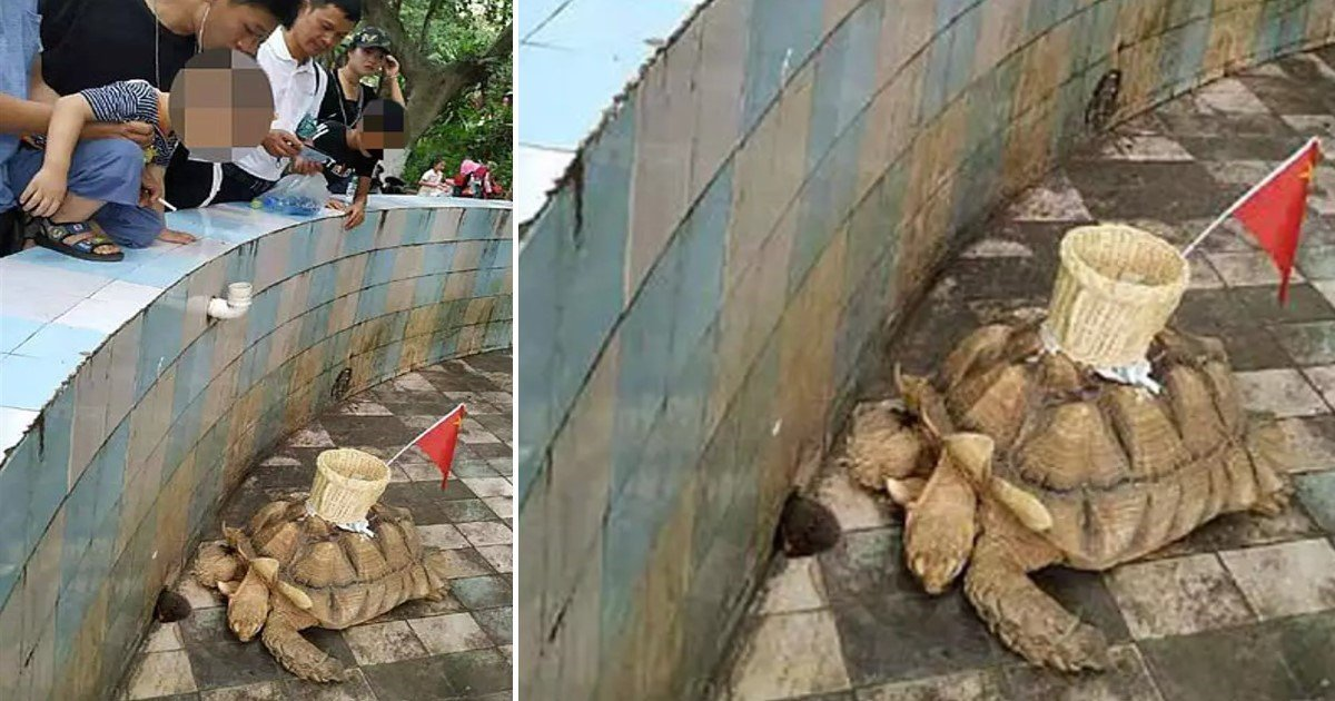 a 55.jpg?resize=1200,630 - A Zoo 'Glued' A Basket Onto Tortoise's Shell To Collect Coins Thrown By Tourists