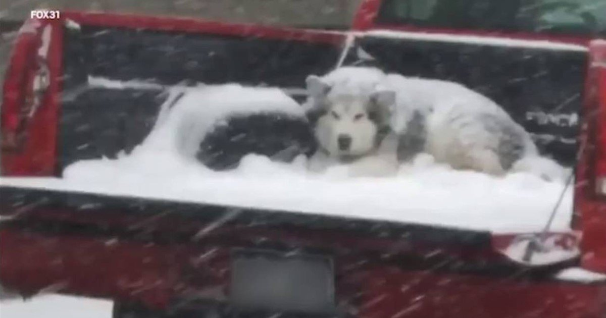 a 58.jpg?resize=412,275 - Photo Of A Dog Covered With Snow While Sitting Behind A Moving Pickup Truck Sparked An Online Debate