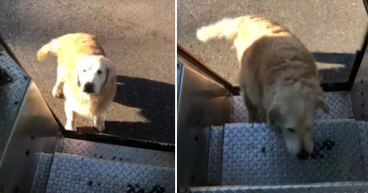 a 74.jpg?resize=300,169 - Un conducteur UPS attentionné garde des gâteries pour nourrir des chiens sur son chemin