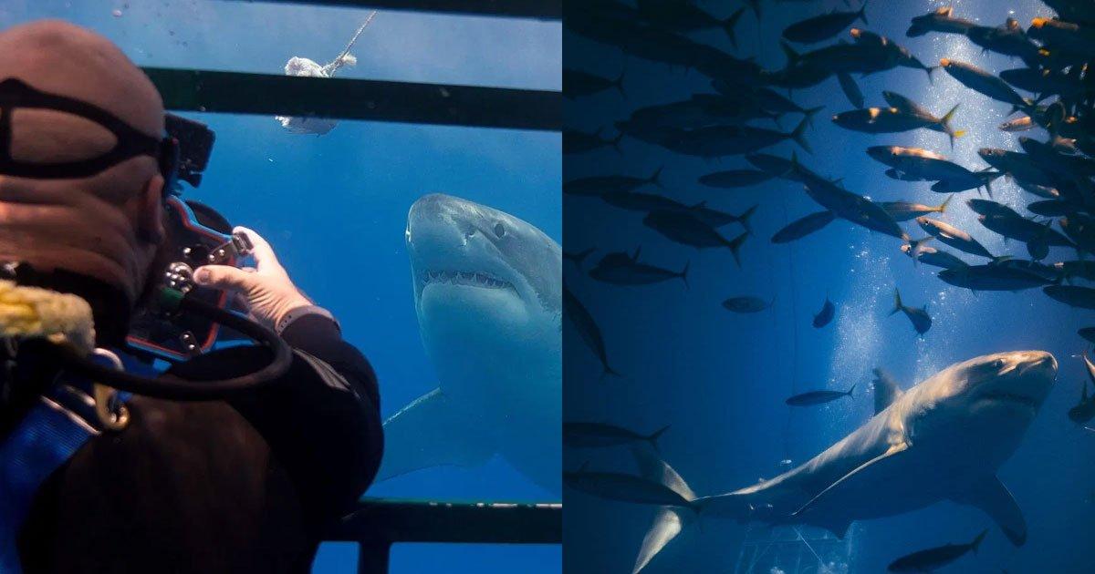 a photographer clicked amazing close up shots of sharks and said fascination was probably born out of fear.jpg?resize=300,169 - Un photographe risque sa vie pour prendre des photos avec des plans rapprochés de requins et montrer à quel point ils sont incroyables