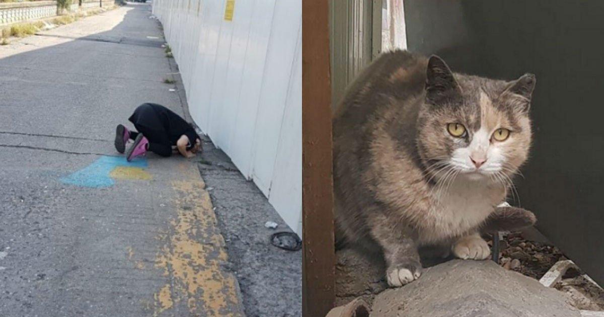 """ac55804a74a7a3866c71748cbd9d3c7c.jpg?resize=1200,630 - """"'고양이'들이 갇혀 있는 건물을 '철거' 해버린대요""""... 노량진 수산시장의 안타까운 사연"""