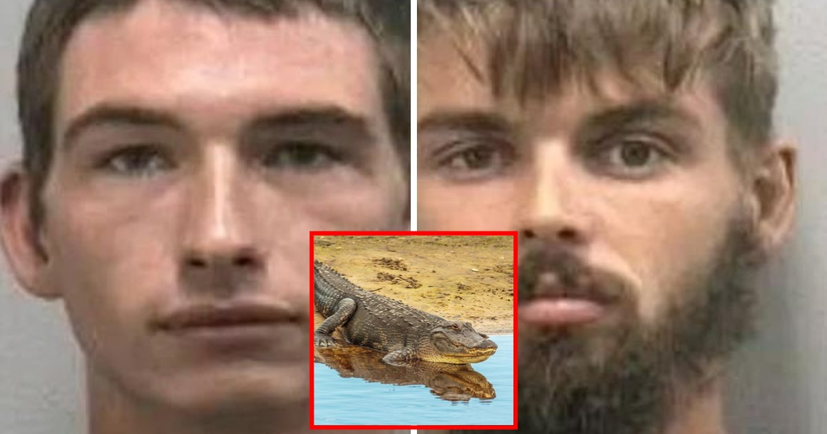 alligator3.png?resize=412,232 - Two Men Arrested For Capturing An Alligator And Giving It Alcoholic Beverages