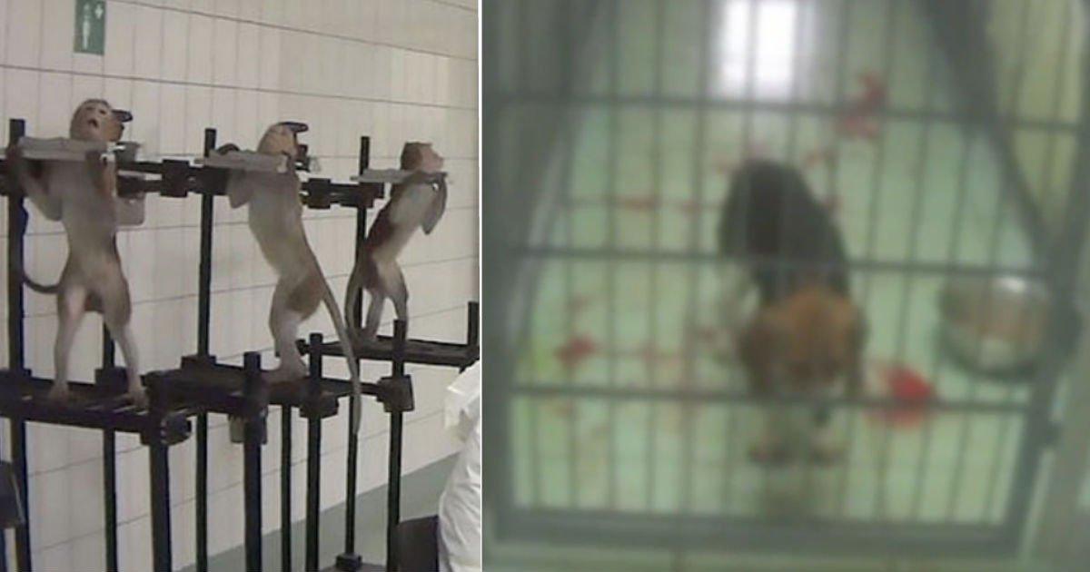 animal.jpg?resize=1200,630 - 猿にも鉄の首輪?!ドイツで犬、猫、猿などに「暴力的な」動物実験が波紋