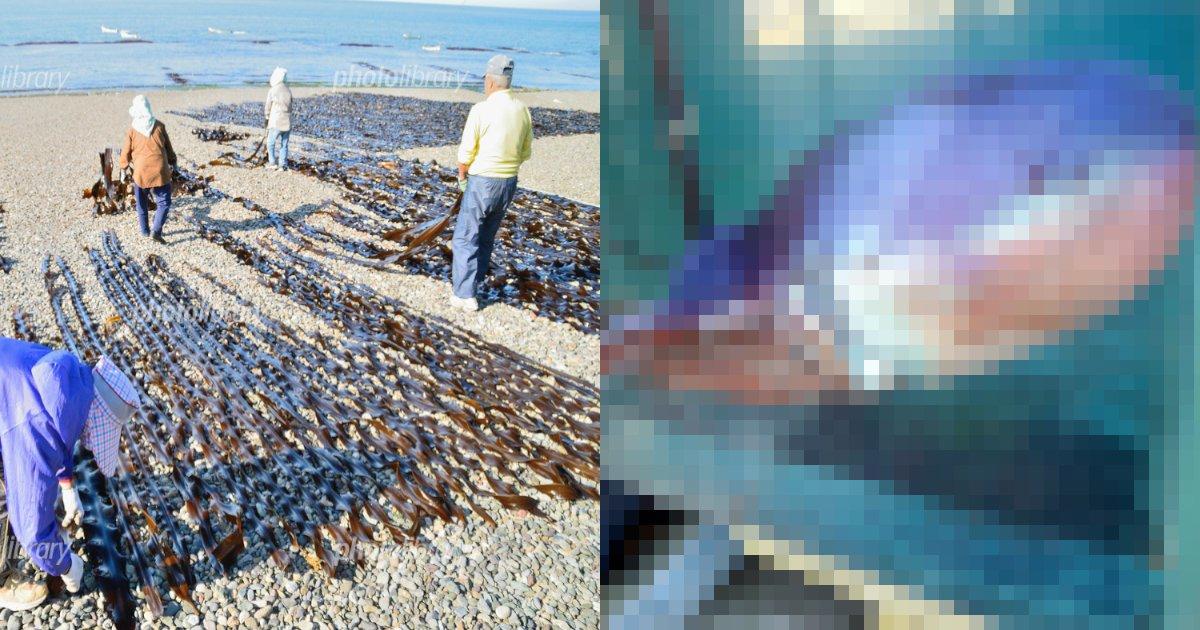 aomori.png?resize=412,232 - 奇妙な軟体生物、青森で捕獲‼ タコ⁇イカ⁇ その正体は⁈