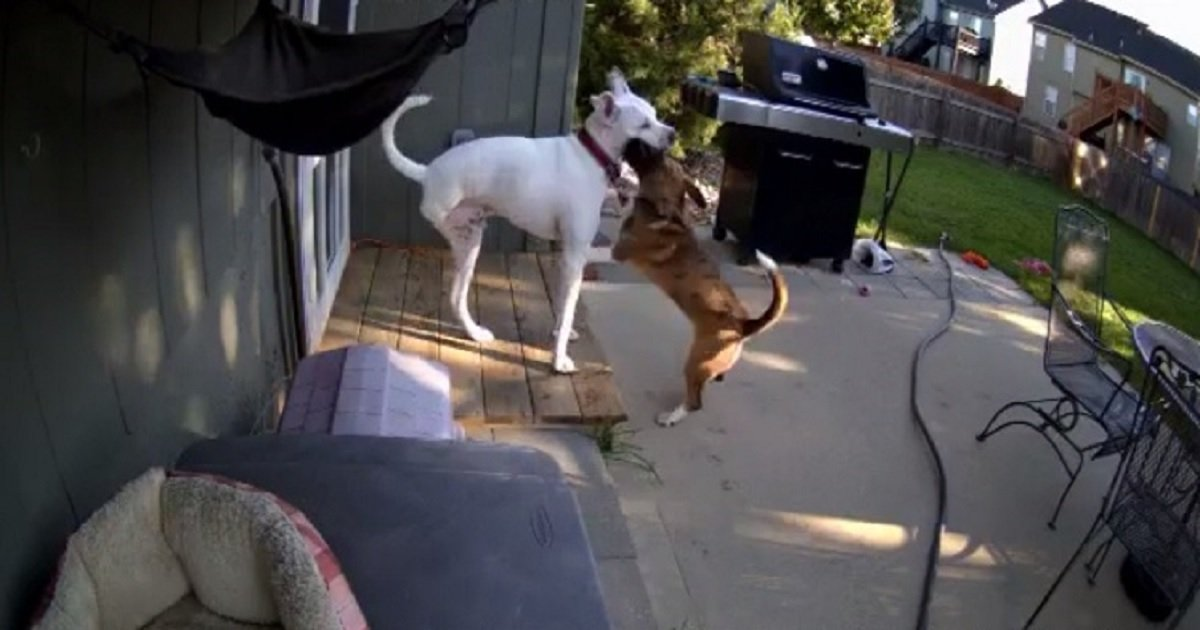 b3 5.jpg?resize=412,232 - Sick Dog With Missing Hind Leg Gets Cheered Up By His Best Bud