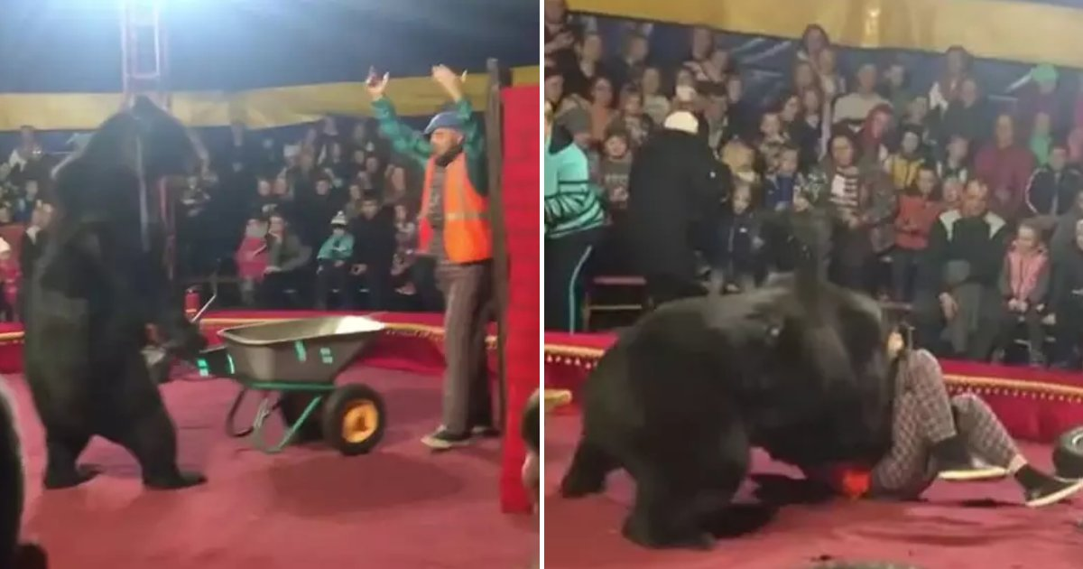 bears3.png?resize=412,232 - 600Lbs Black Bear Rushed To Circus Trainer During Their Live Performance