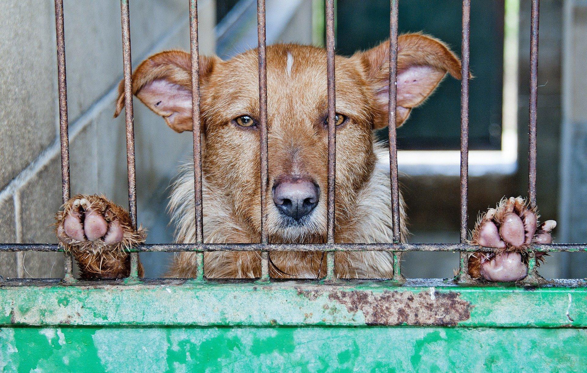 caged 278910 1920.jpg?resize=300,169 - Le ministre de l'Agriculture veut punir ceux qui abandonnent leurs animaux de compagnie
