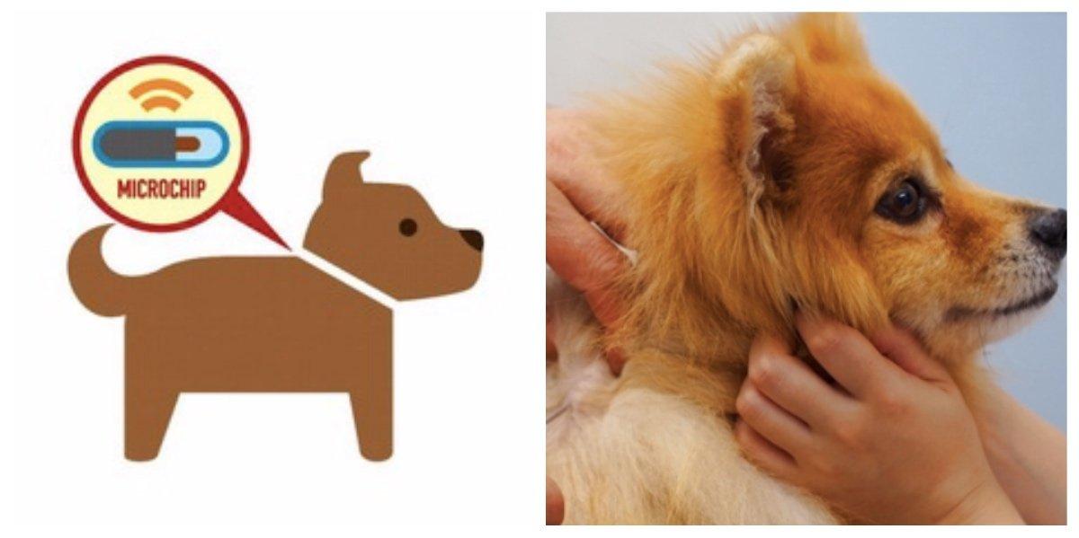 collage fotor 1.jpg?resize=412,232 - オーストラリアの一部地域で ペットの散歩義務化へ!違反者には罰金も