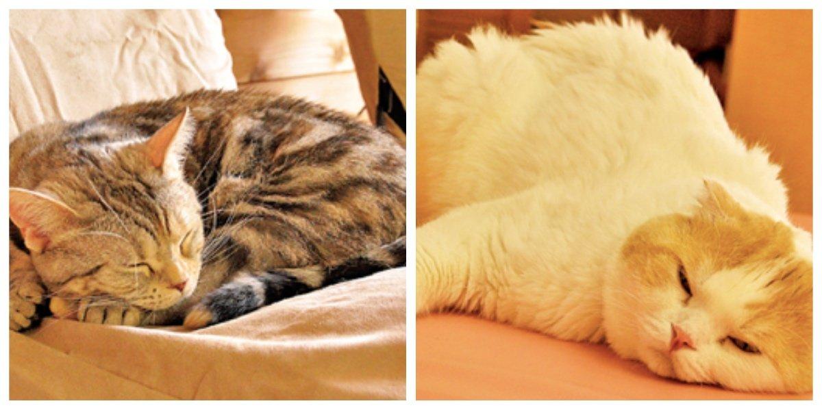 collage fotor 3.jpg?resize=412,232 - 収容された猫はペットホテルへ?!福岡市が、猫の新しい家族探しのための新制度を導入!