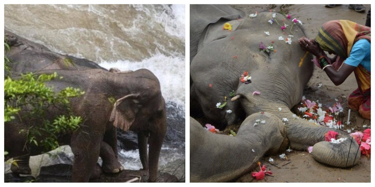 collage fotor 7.jpg?resize=1200,630 - ゾウが次々と落ちて死ぬ滝 その原因は仲間を助けようとしたため?!