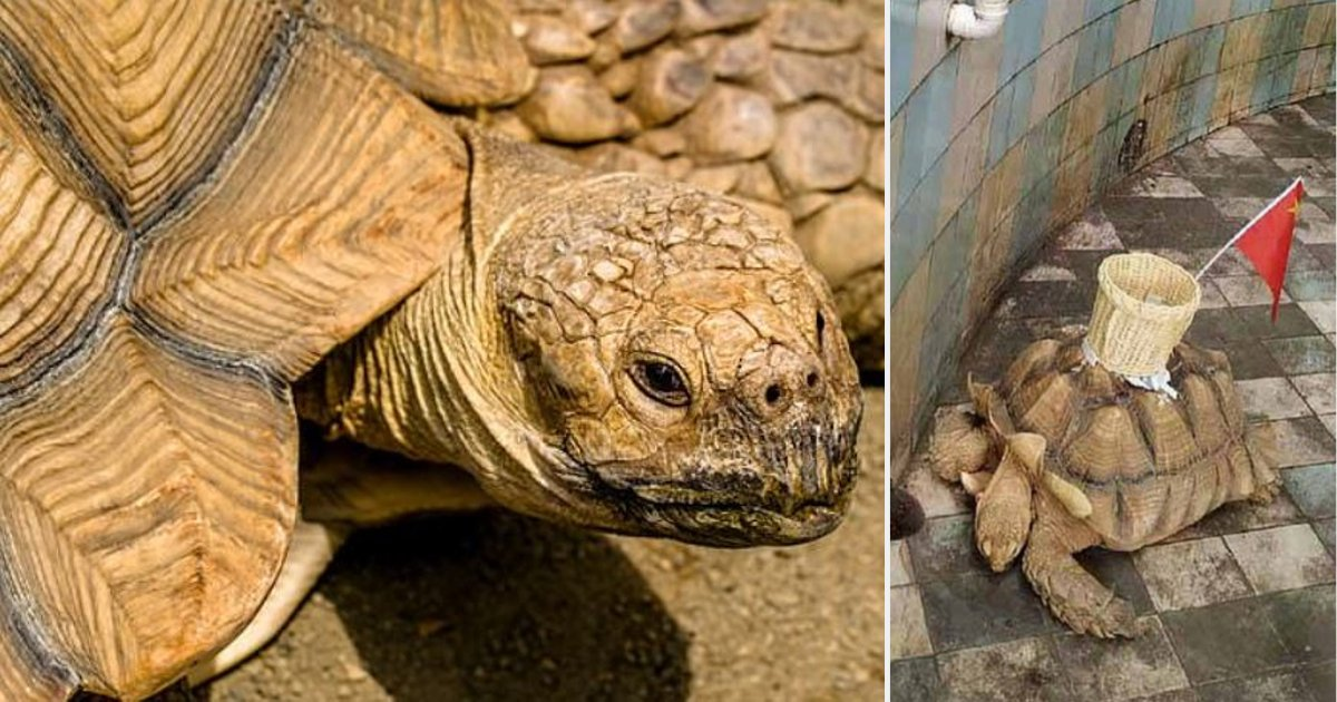d2 1.png?resize=1200,630 - Chinese Zoo Glued a Basket On The Back of a Tortoise to Collect Money Thrown by Tourists