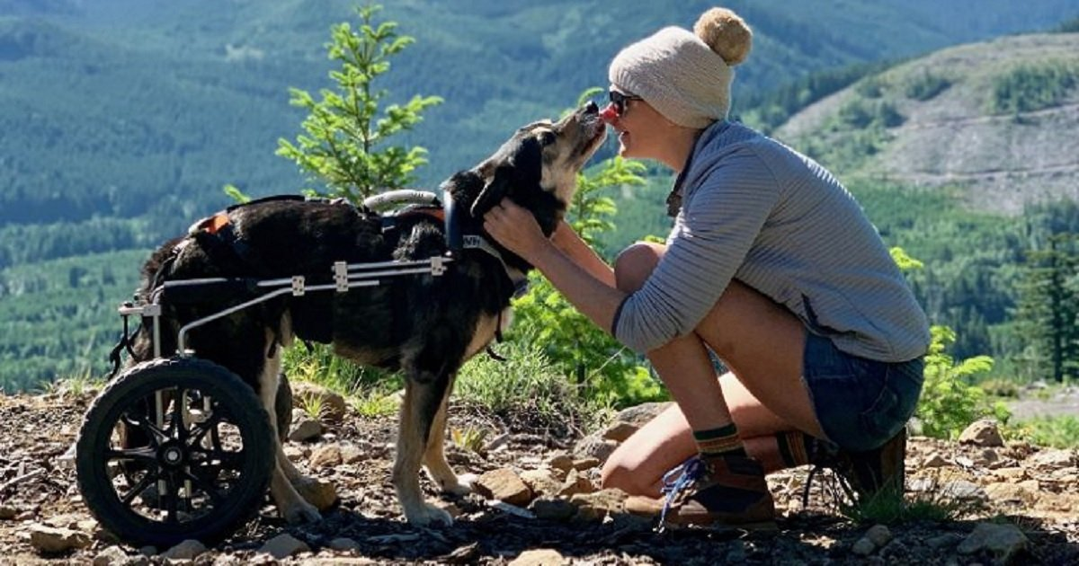 d3 3.jpg?resize=1200,630 - Backpacking Dog Who Was Paralyzed Received A Doggy Wheelchair So He Could Continue His Travels
