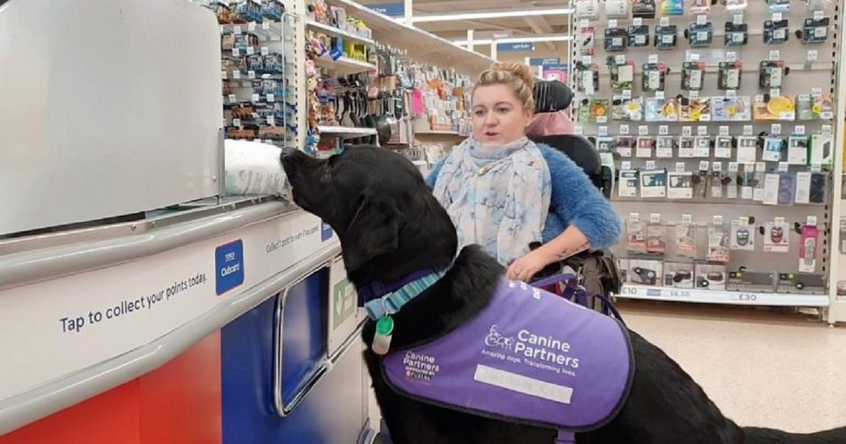 d3 4.jpg?resize=412,232 - Amazing Labrador Could Do Almost Anything For His Disabled Owner, Even Helping To Pay At The Counter