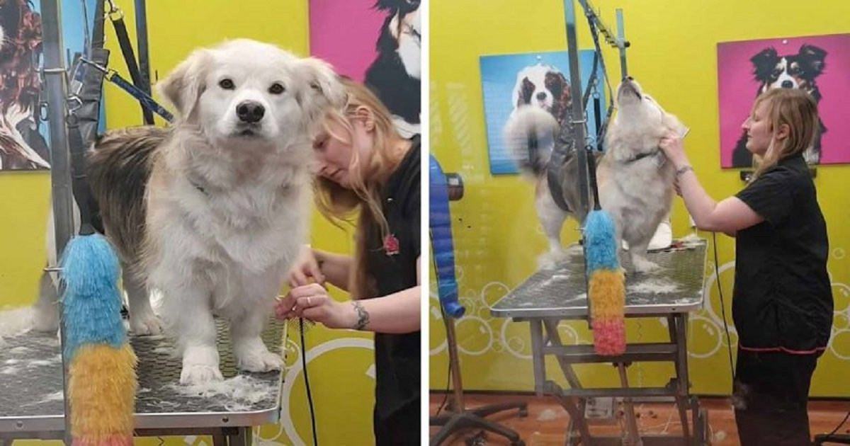 d3 7.jpg?resize=412,232 - The Hilarious Moment A Dog Shot His Owner An Aggrieved Look For Sending Him To The Groomers