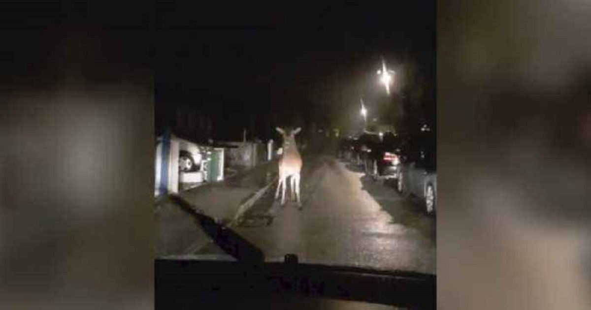 d3 8.jpg?resize=412,232 - Giant Deer Caught In The Headlights Fearlessly Walked Up To The Car To Inspect It