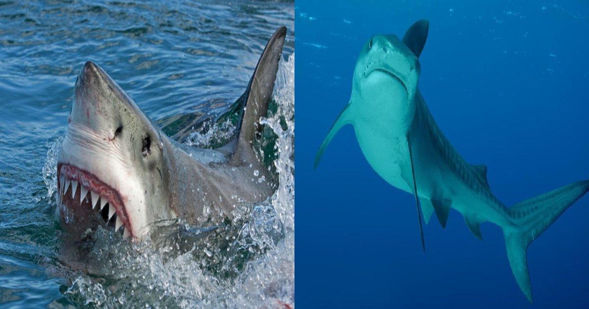 e696b0e8a68fe38397e383ade382b8e382a7e382afe38388 7 2.png?resize=1200,630 - サメに襲われた母親、両腕と胸を失い肋骨があらわに「サメおそろしすぎる」