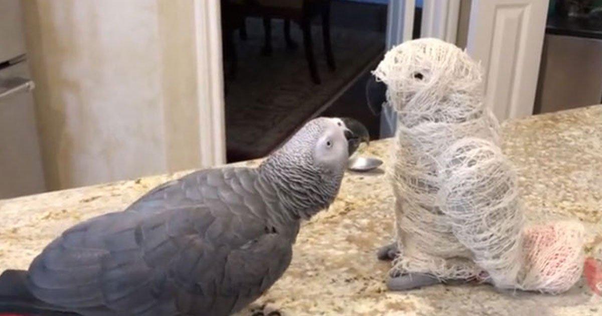 einstein parrot scary mummy.jpg?resize=300,169 - La réaction de ce perroquet qui découvre une momie vaut le détour