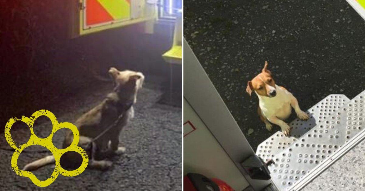jack3.png?resize=412,275 - Un chien loyal a sauvé son propriétaire tombé dans un fossé en allant chercher les secours