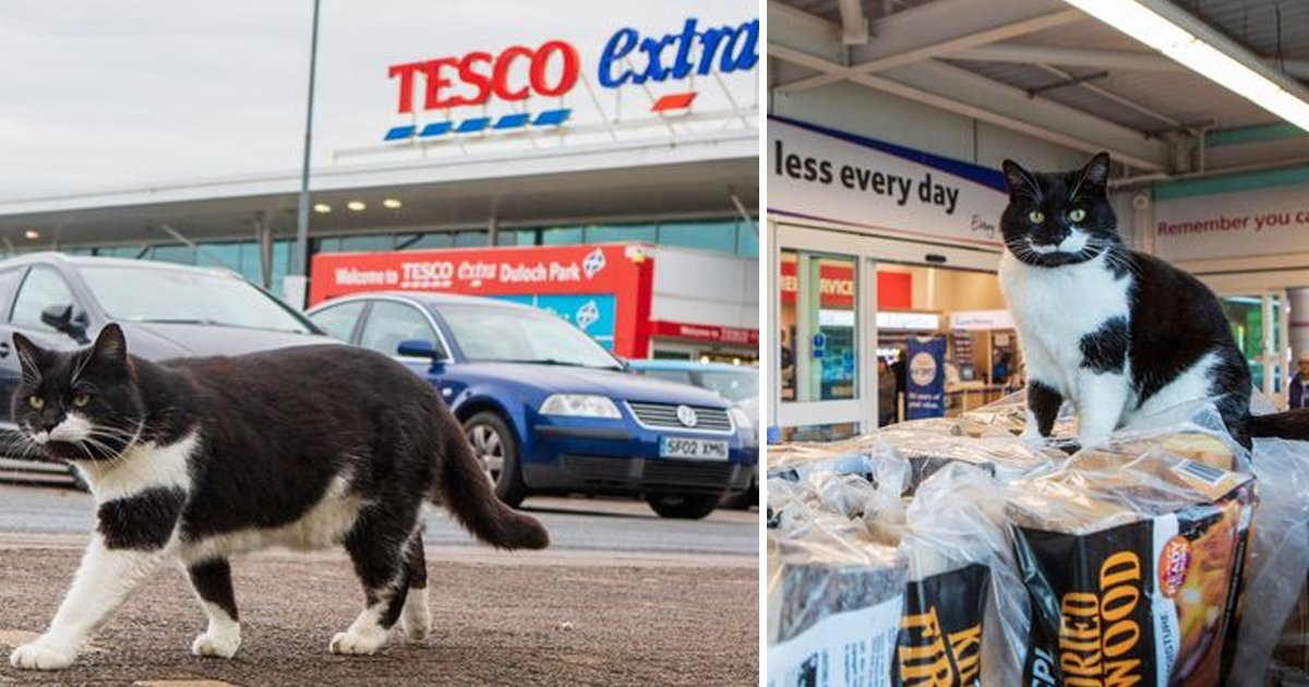 nn.jpg?resize=412,232 - A Moggie Cat Considers Tesco As His Home And Is Now Overweight After Being Fed By Shoppers With With Pringles