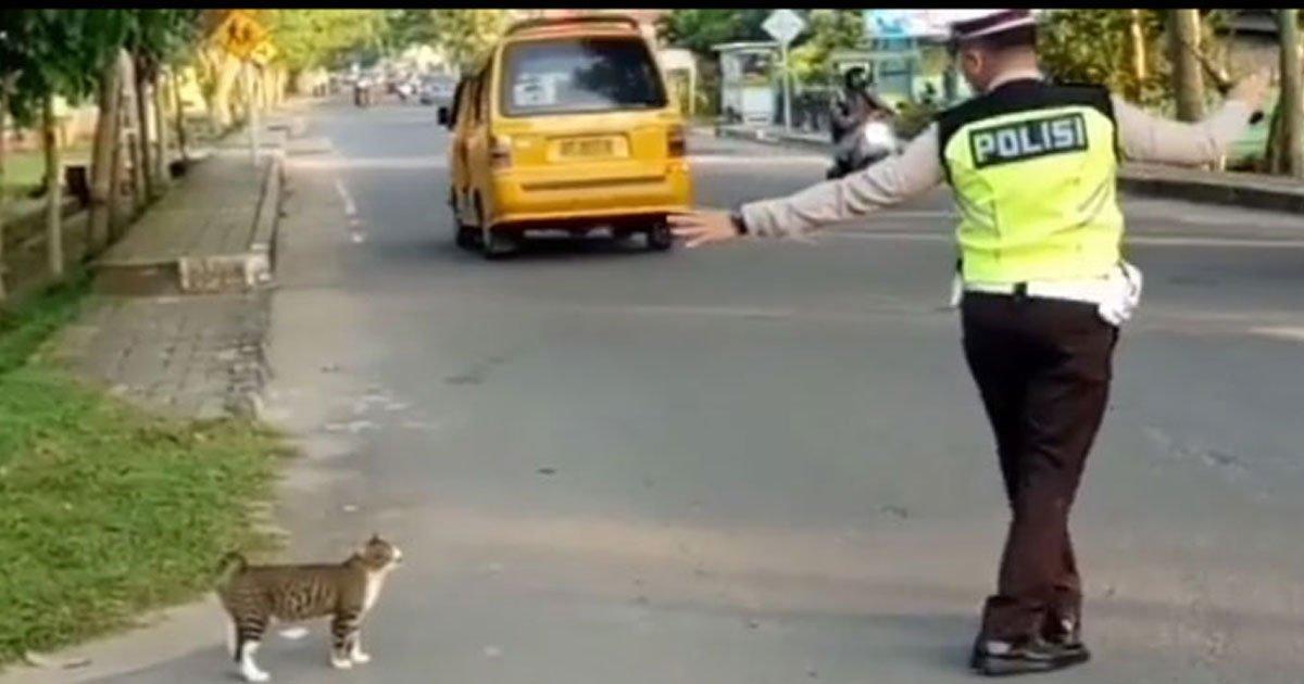 officer hlped cat cross road.jpg?resize=412,275 - Vidéo adorable : Un policier a aidé un chat à traverser en toute sécurité une route très fréquentée