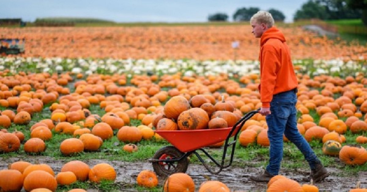 p3 9.jpg?resize=412,232 - A Pumpkin Farm This Young Man Started When He Was 13 Years Old Became One Of The Largest In The UK