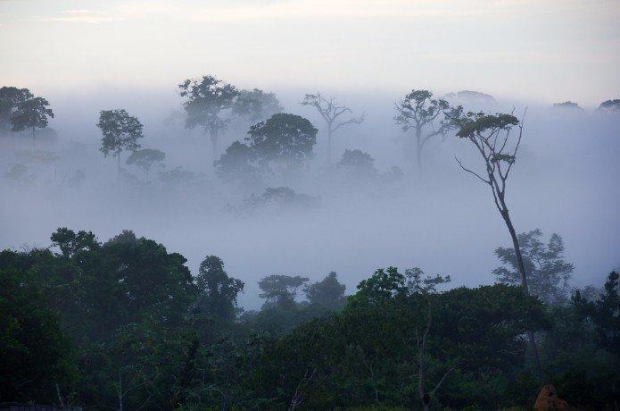 positivr.jpg?resize=412,232 - Un torrent d'espoir : Il a plu en Amazonie