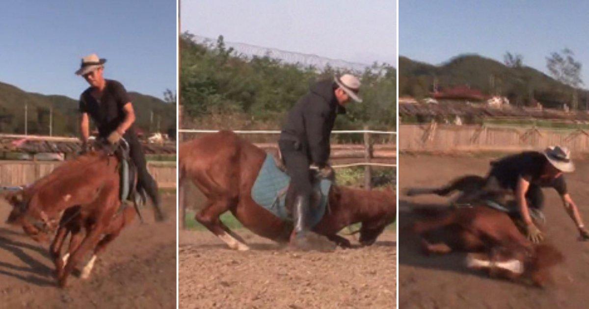 s 1 8.png?resize=366,290 - Ce cheval intelligent fait semblant d'être mort chaque fois que quelqu'un essaie de le monter