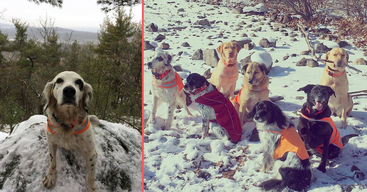 s 2 9.png?resize=1200,630 - Un chien a donné sa vie pour sa famille d'une manière héroïque
