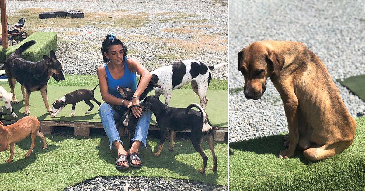 s3 7.jpg?resize=300,169 - Une femme a quitté son emploi et a dépensé 45 000 euros de ses propres économies pour sauver des chiens errants