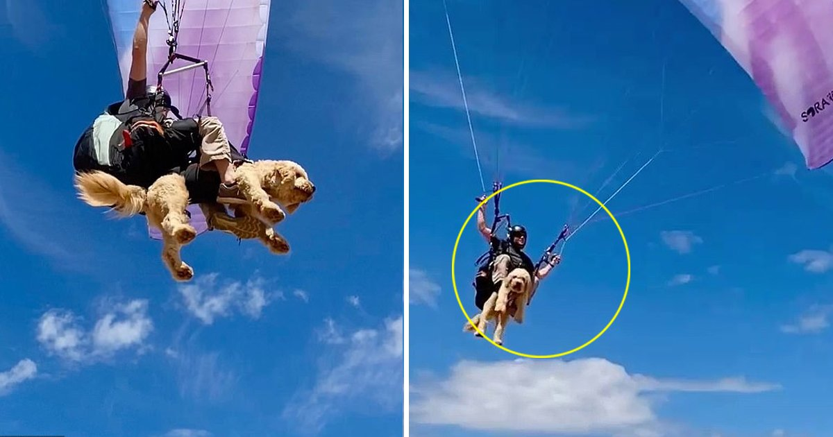 safafsafsasf.jpg?resize=1200,630 - A Pooch Flying In The Skies Of Sydney Has Won The Hearts Of Many Becomes An Internet Celebrity